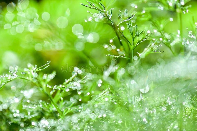 Fondo verde floreale naturale defocused e vago astratto con bello bokeh, rugiada su erba fotografia stock