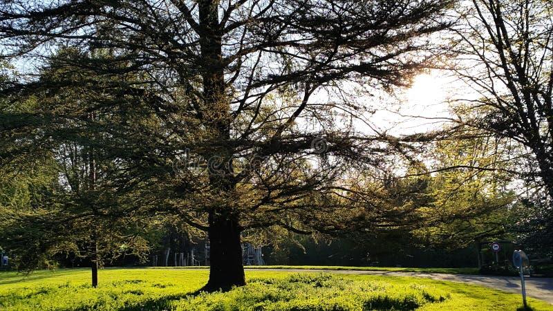 Fondo verde grande del textureand de los árboles fotos de archivo