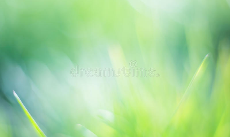 Fondo verde hermoso del bokeh foto de archivo libre de regalías