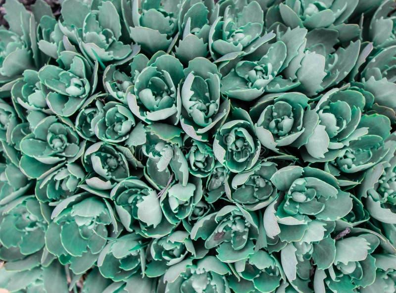Fondo verde natural de las hojas verdes en tonos fríos Textura de la pared de la hierba verde para el fondo Endecha plana, visión stock de ilustración