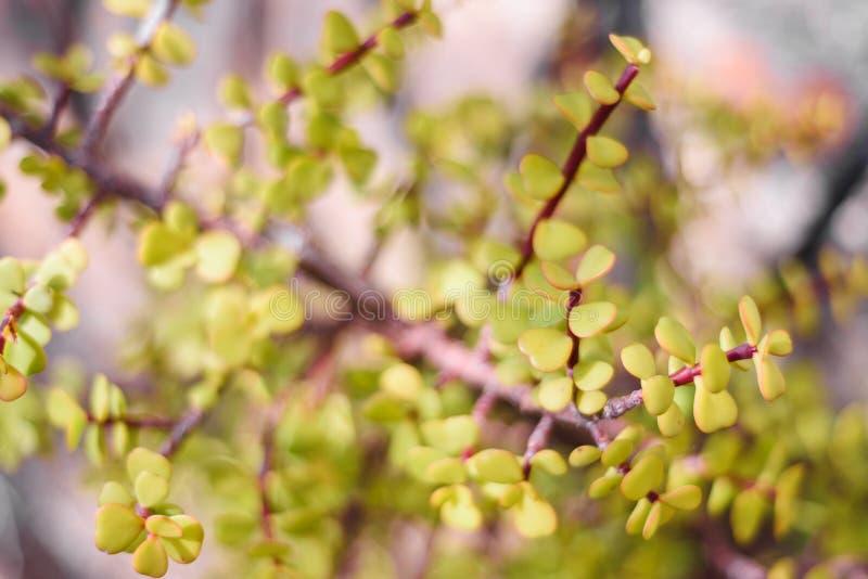 Fondo verde natural del arbusto con el foco selectivo imágenes de archivo libres de regalías