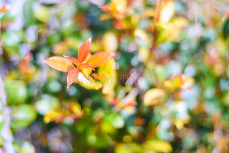 Fondo verde natural del arbusto con el foco selectivo imagen de archivo