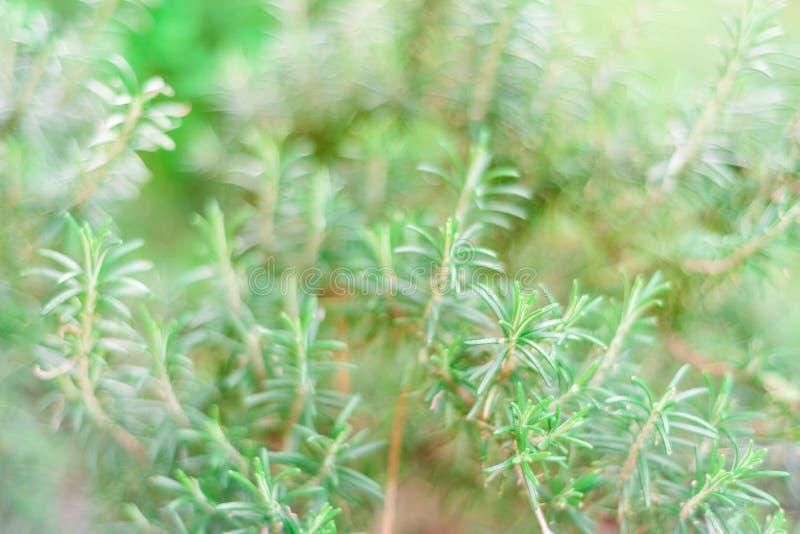 Fondo verde natural del arbusto con el foco selectivo imagen de archivo libre de regalías