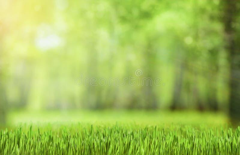 Fondo verde natural del bosque fotos de archivo