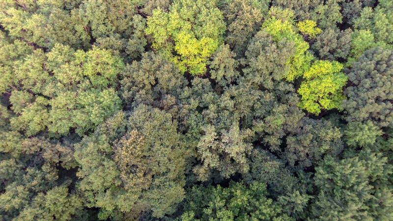 Fondo verde natural del bosque de la primavera de la visi?n a?rea imagen de archivo libre de regalías