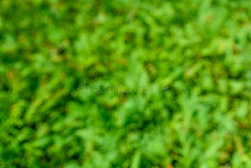 Fondo verde natural y extracto borroso Concepto de Eco imagen de archivo