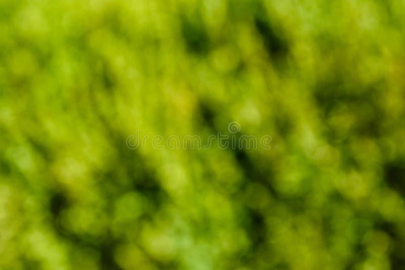 Fondo verde natural y extracto borroso Concepto de Eco fotografía de archivo libre de regalías
