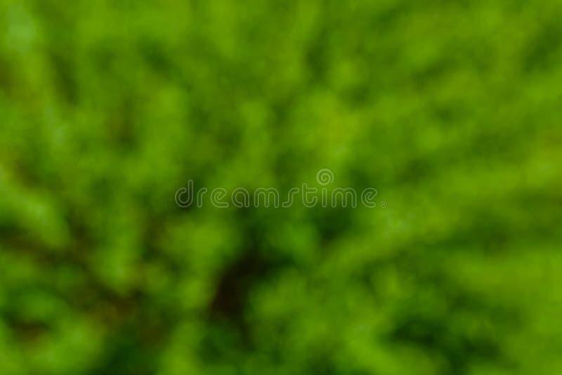 Fondo verde natural y extracto borroso Concepto de Eco imagen de archivo libre de regalías