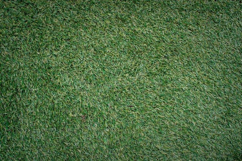 Fondo verde naturale di struttura dell'erba di Manila fotografia stock