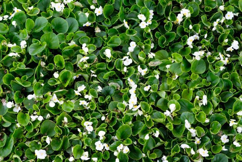 Fondo verde naturale fatto dei fiori e delle foglie fotografia stock
