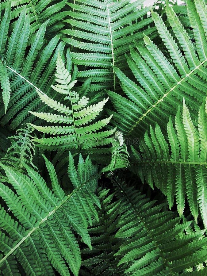 Fondo verde vegetale immagini stock libere da diritti