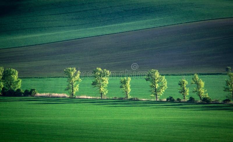 Fondo verde y del tirquoise de la primavera del campo del extracto foto de archivo