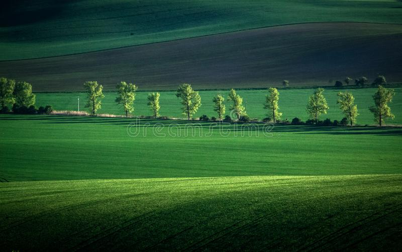 Fondo verde y gris del extracto del campo de la primavera imagenes de archivo