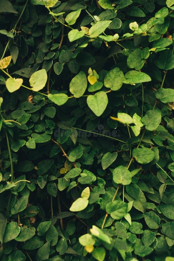 Fondo verticale di molte piccole foglie verdi nella giungla Modello per il blog fotografia stock libera da diritti