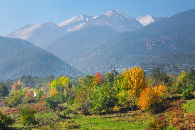 Fondo vibrante di panorama di autunno con gli alberi variopinti ed i picchi di alte montagne verdi, rossi, gialli fotografie stock