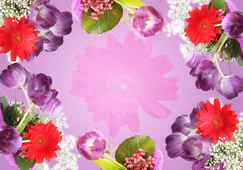 Fondo violeta de los tulipanes fotos de archivo libres de regalías