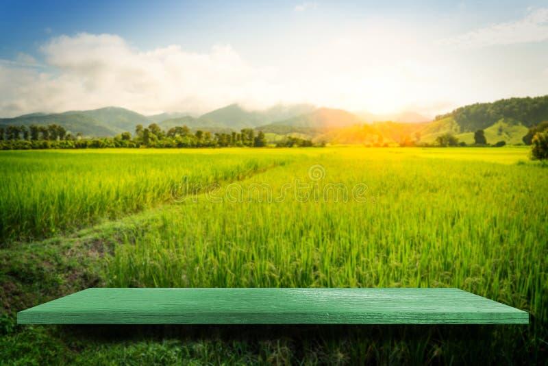 Fondo vuoto verde di Paddy Nature dell'azienda agricola del contatore dello scaffale fotografia stock
