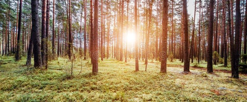 Fondo w di ecologia fotografie stock libere da diritti