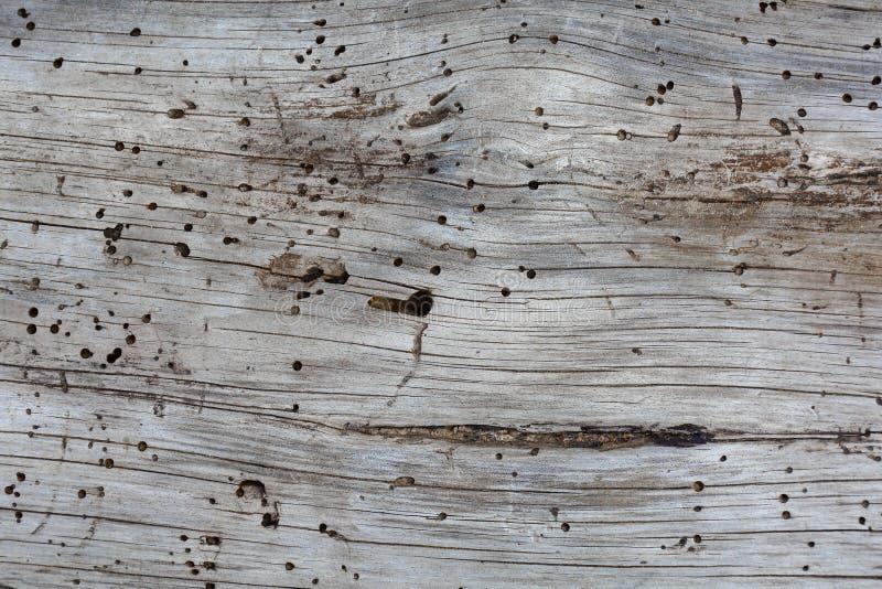 Fondo y textura de madera monocromáticos fotografía de archivo