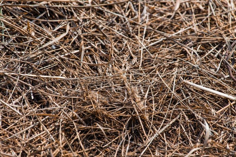 Fondo y textura del heno viejo de la hierba seca imagen de archivo libre de regalías