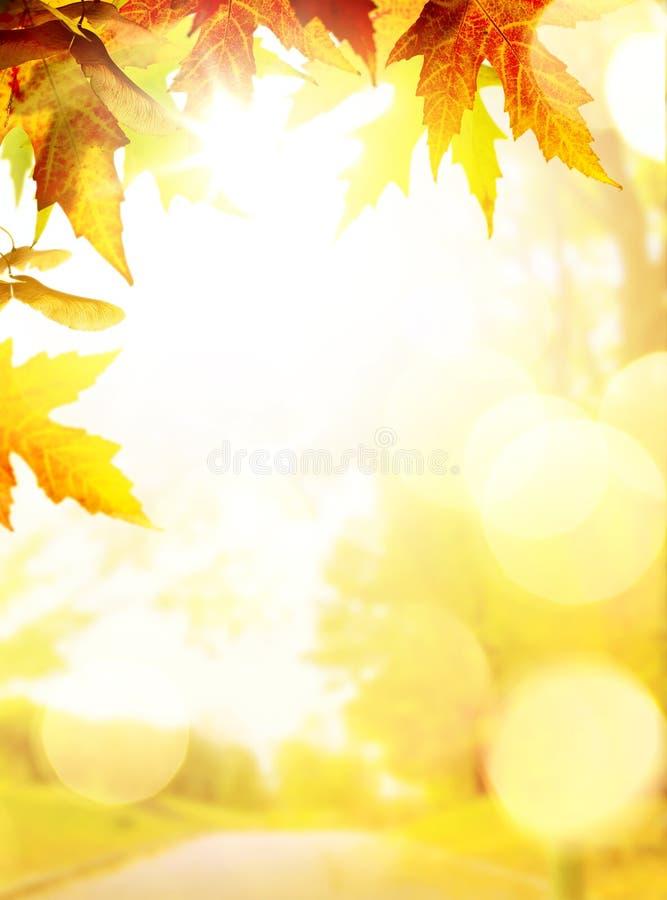 Fondos del otoño del arte con las hojas amarillas fotografía de archivo