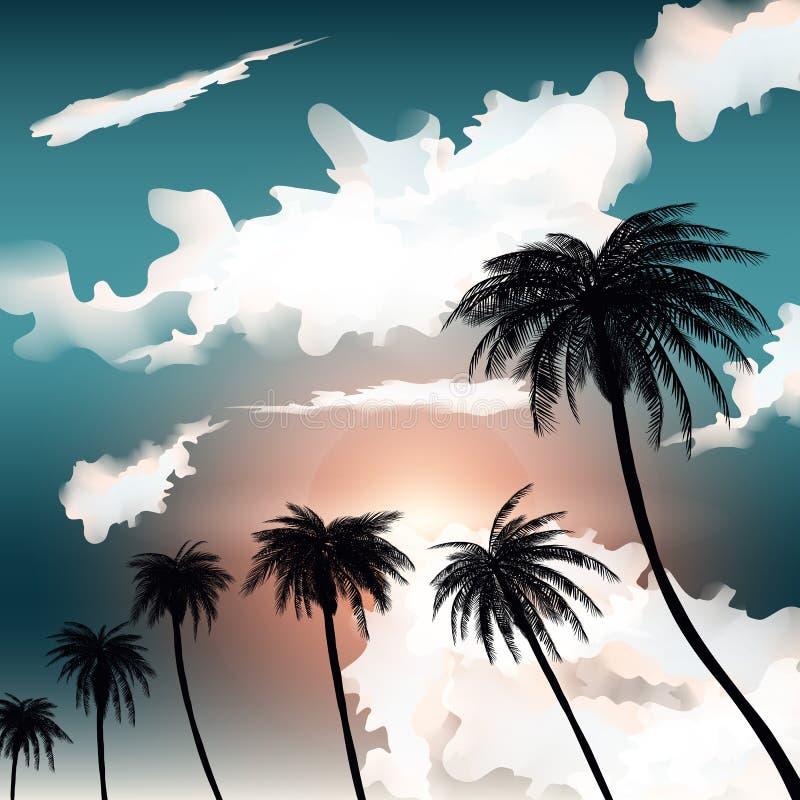 Fondos Tropicales Del Verano Con Las Palmas El Cielo Y La