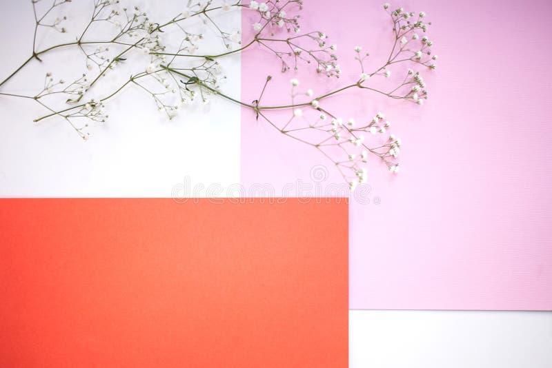 Fondos y disposición Fondo geométrico horizontal de Minimalistic de blanco, del rosa y de la sombra coralina con una rama del gyp fotografía de archivo libre de regalías
