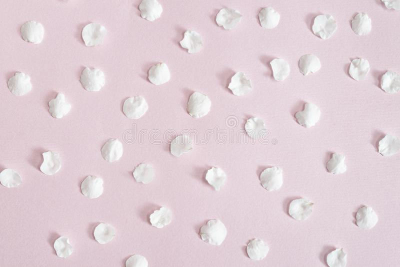 Fondos y texturas Pétalos blancos del albaricoque en un fondo rosado Primer foto de archivo
