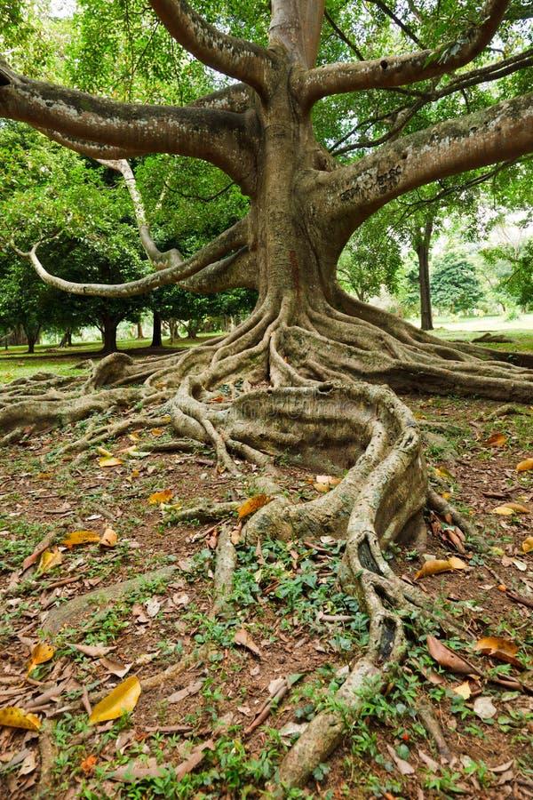 Fonds d'arbre photographie stock libre de droits