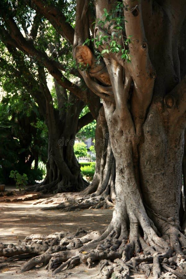Fonds d'arbre images stock