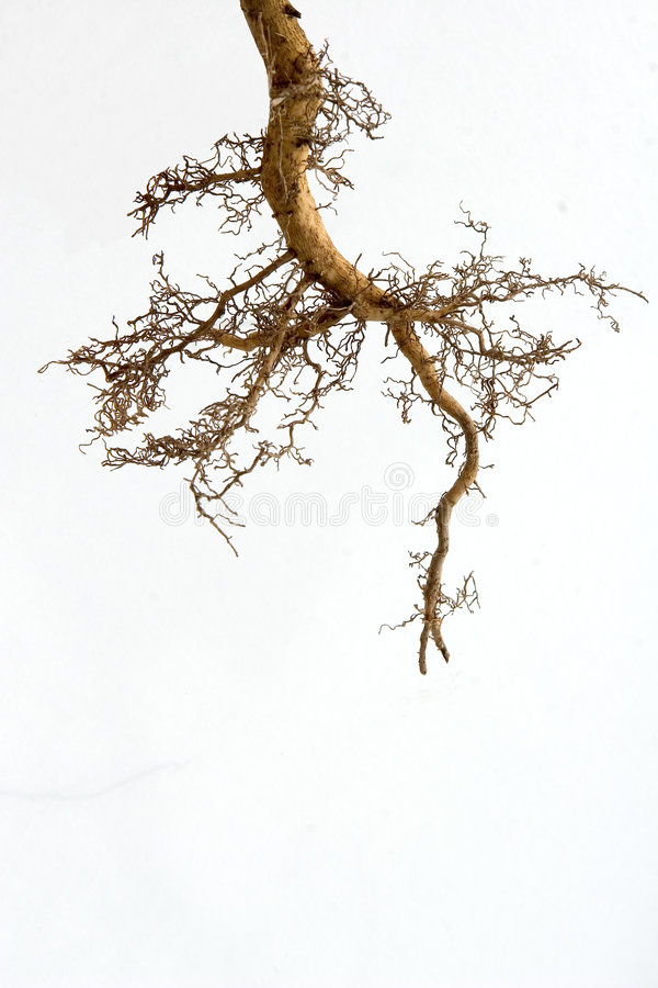 Fonds d'arbre photos stock