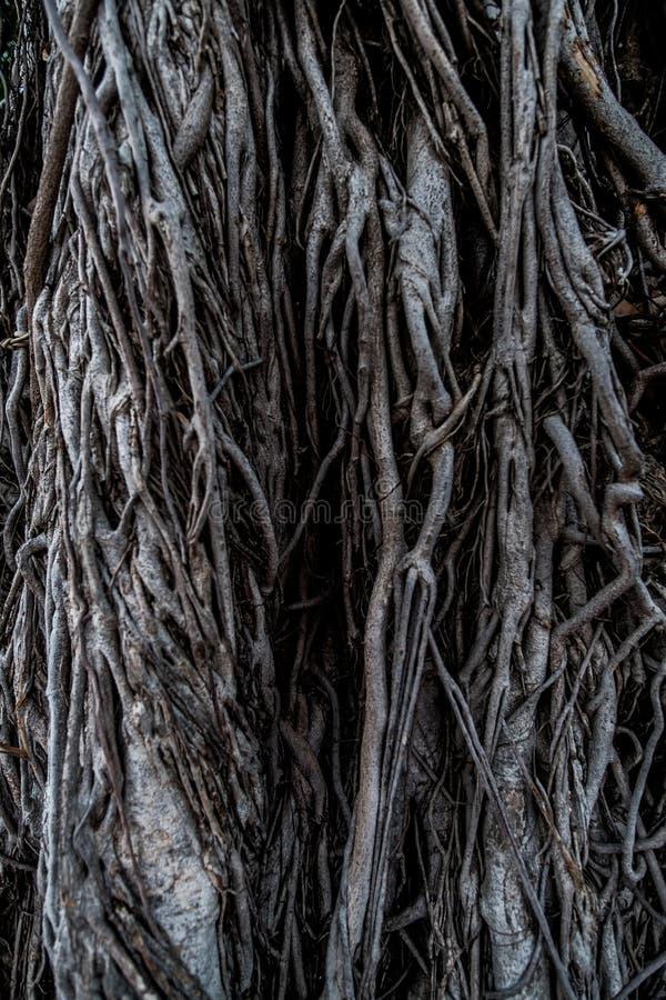 Fonds d'un arbre images stock