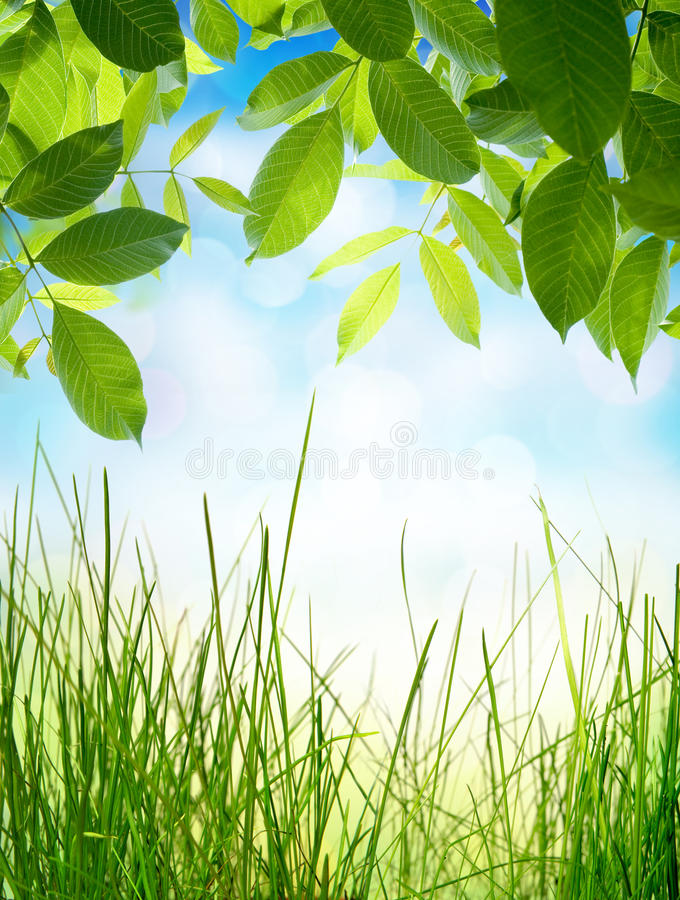 Fonds naturels abstraits avec l'herbe verte photos libres de droits