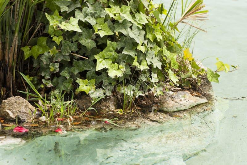 Fontaine avec des roches et des usines photographie stock