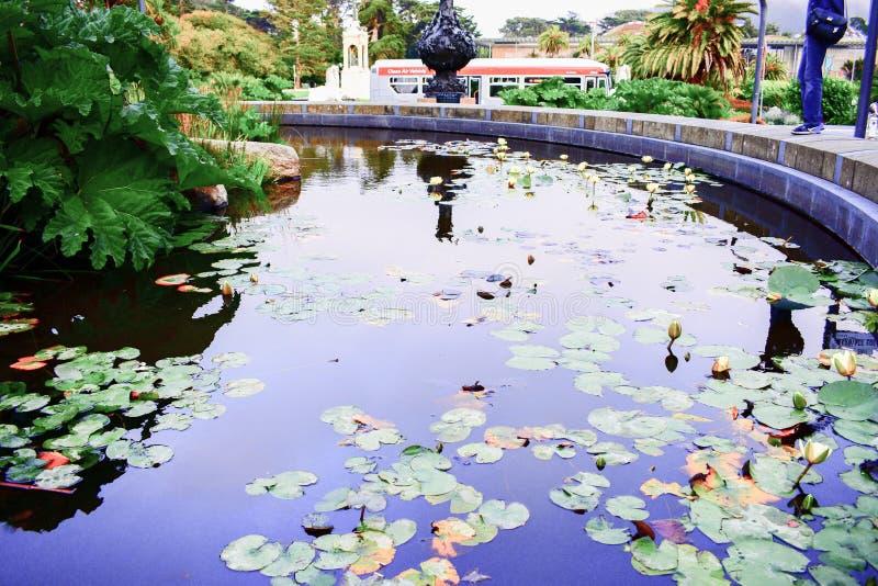 Fontaine d'eau complètement de Lotus Flowers image stock