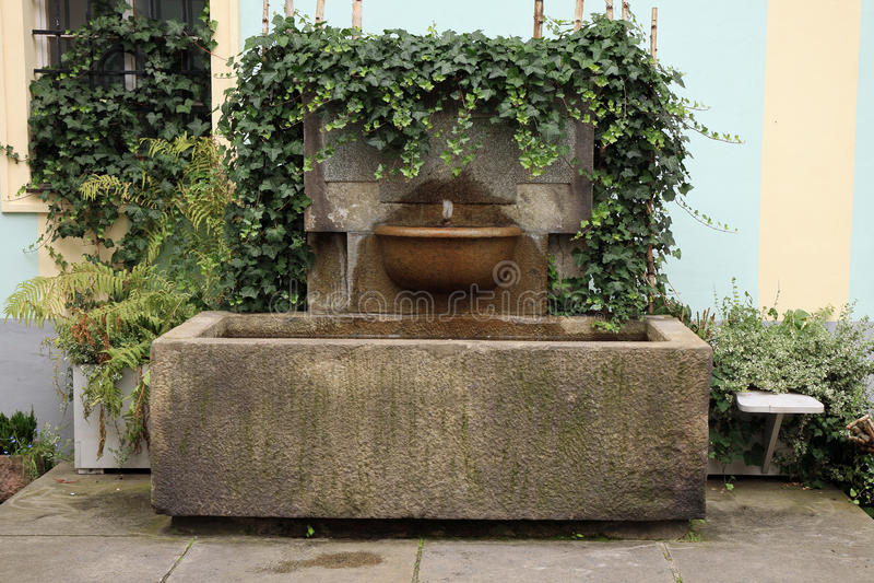 Fontana di parete con l'edera fotografia stock libera da diritti