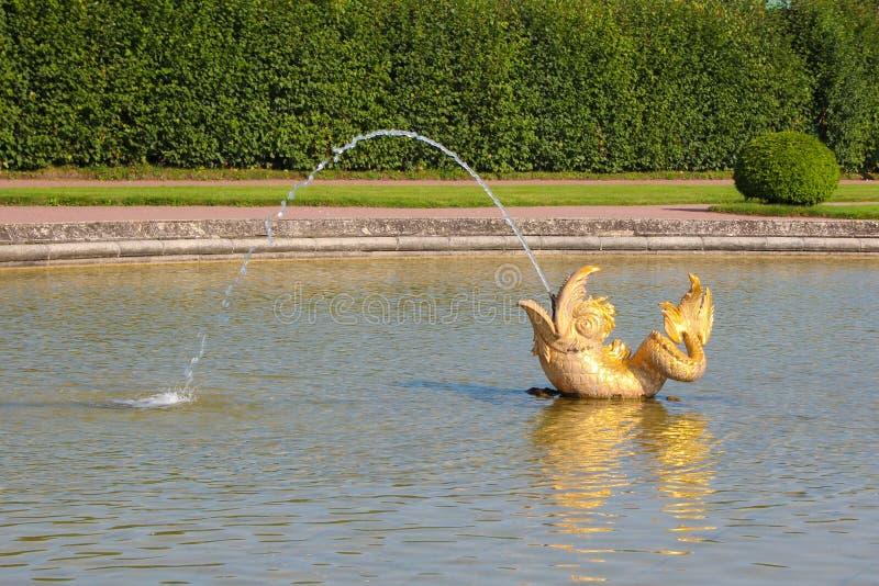 Fontanna w postaci złocistej ryba przy Peterhof pałac Uroczystym ogródem Peterhof, Petersburg, Rosja zdjęcie royalty free