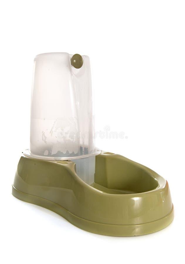 Fonte de água potável do animal de estimação imagens de stock royalty free