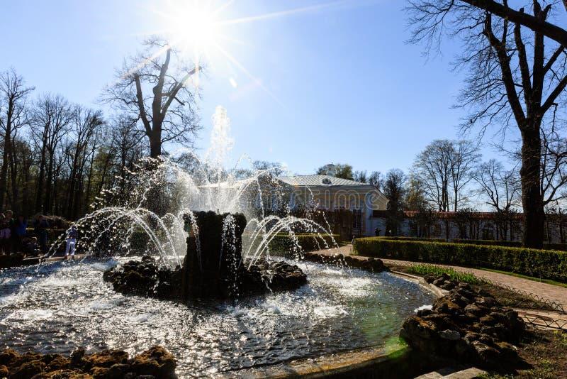 Fonte de Snop perto do palácio de Monplaisir no jardim mais baixo de Peterhof fotos de stock royalty free