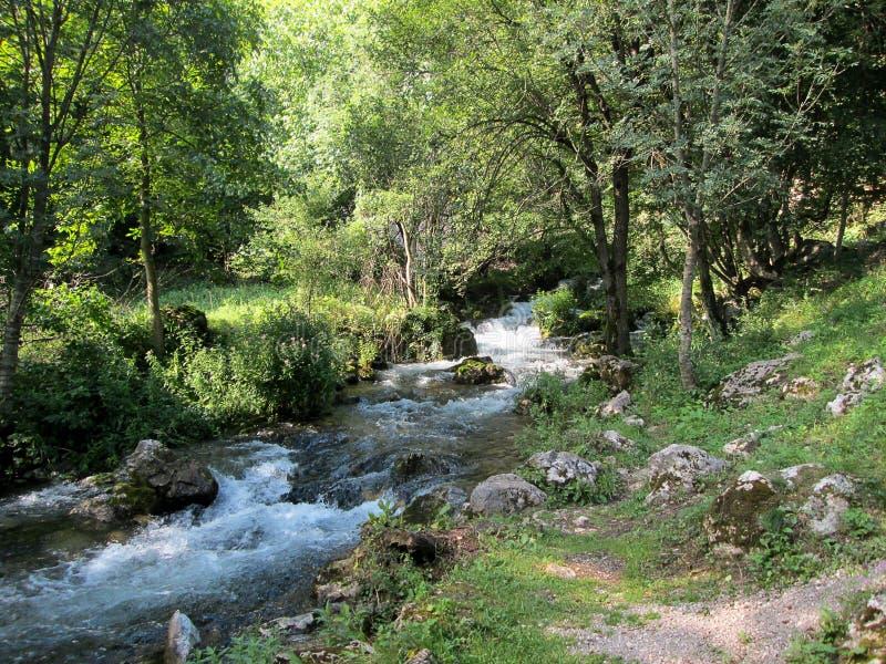 Fonte do rio Resava em Lisine, Sérvia fotografia de stock royalty free