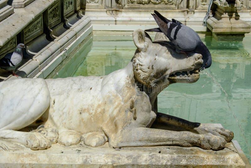 Fonte Gaia di Siena Toscana Italia Europa fotografia stock libera da diritti