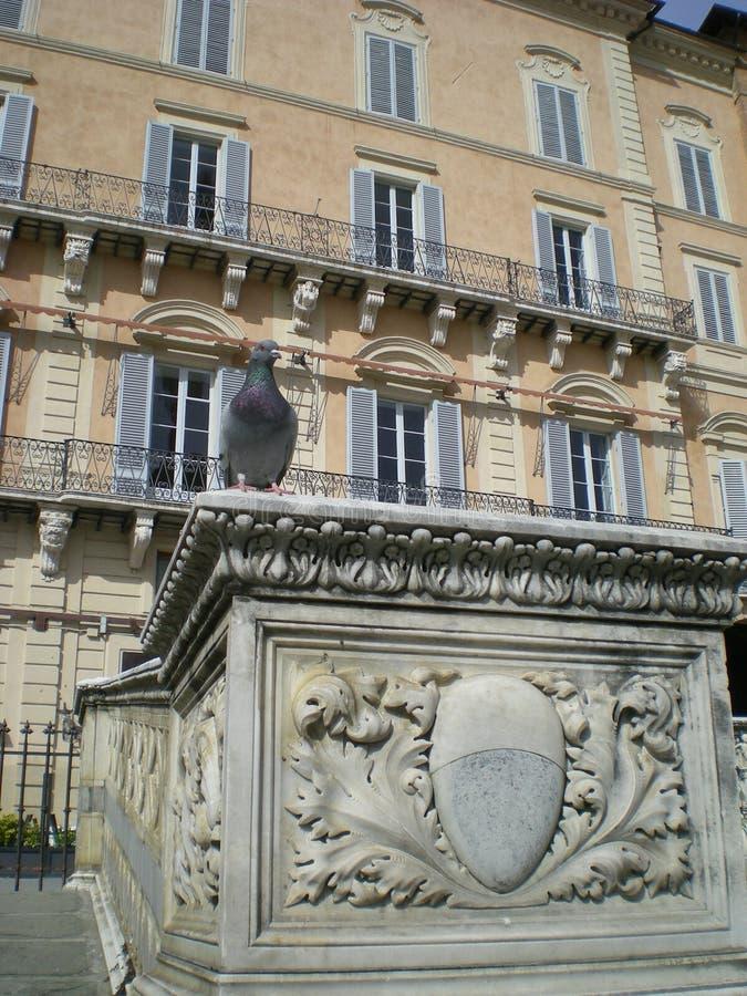 Fonte Gaia (fuente de la alegría) en Siena Italia, Europa foto de archivo libre de regalías