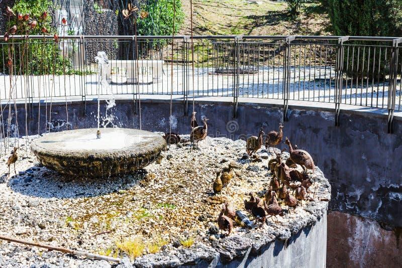 Fontein in Bellini-Tuin in Catanië, Sicilië royalty-vrije stock afbeelding