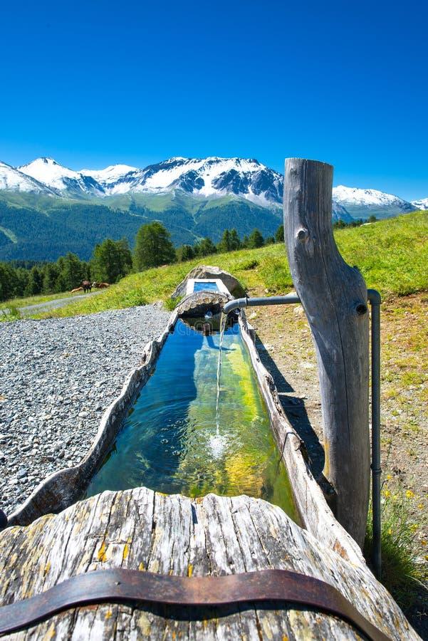 Fontein die in een boomstam in de Zwitserse Alpen wordt gegraven royalty-vrije stock afbeeldingen