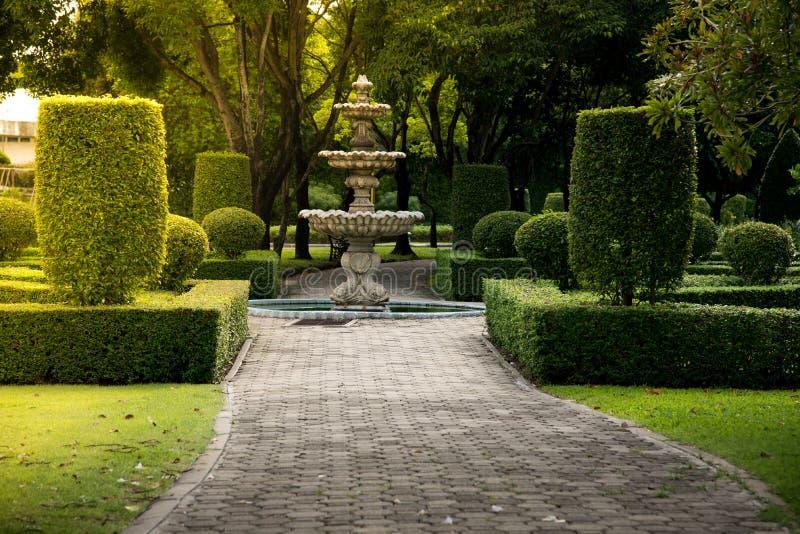 Fontein in het park met hard zonlicht Groene natuurlijke de textuurachtergrond van de struikmuur met de conc grond stock foto