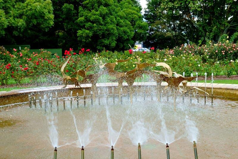 Fontein in Te Awamutu Rose Gardens, Te Awamutu, Nieuw Zeeland, NZ, NZL stock afbeeldingen
