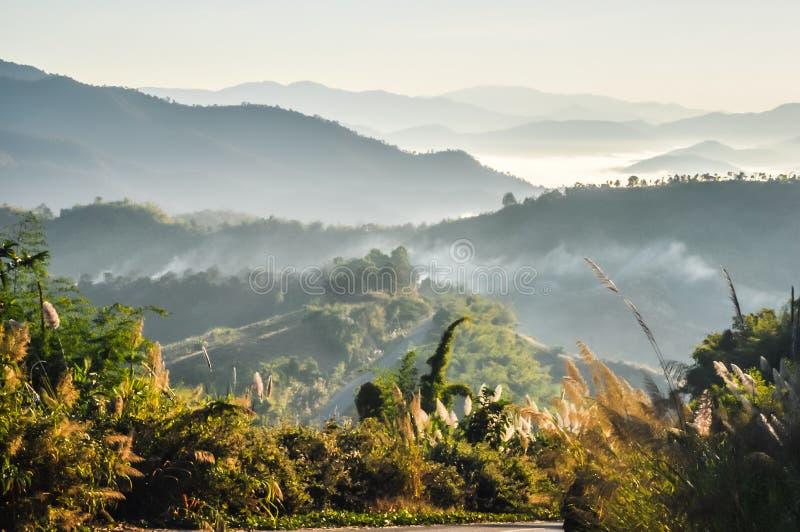 Fonteingras op bergen in vroege ochtendmist en zonlicht stock afbeeldingen