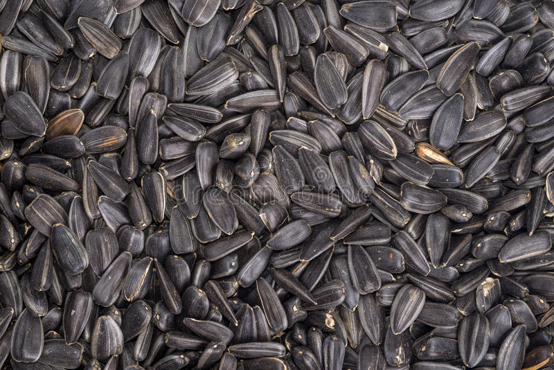 Food background from black seeds of sunflower. Closeup royalty free stock photography