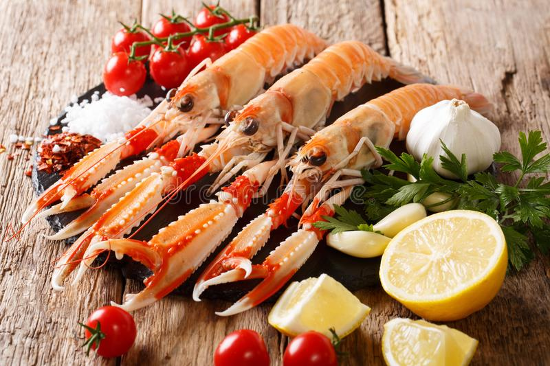 Food background fresh raw langoustine, scampi with vegetables, h stock image