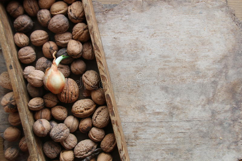 Food background, fresh walnuts in a wooden box. Fresh walnuts in a box on an on rustic wooden background. Vegetarian food, health or cooking concept stock photos